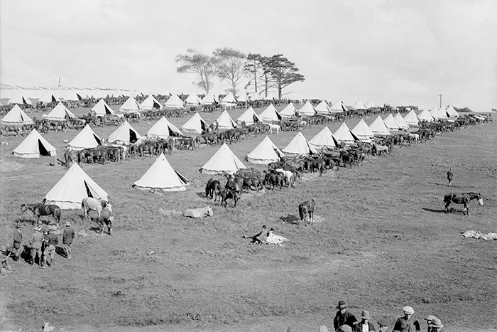 Domain camp. Bell tents and horses (probably for South African War), ca 1900.