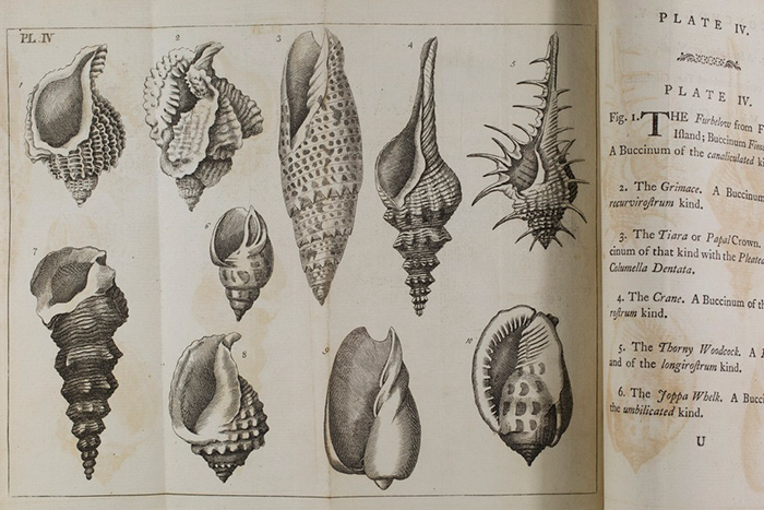Plate IV from Emanuel Mendes da Costa\u0027s \u003cem\u003eElements of conchology or, an introduction to the Knowledge of Shells\u003c/em\u003e. London: printed for Benjamin White, 1776.